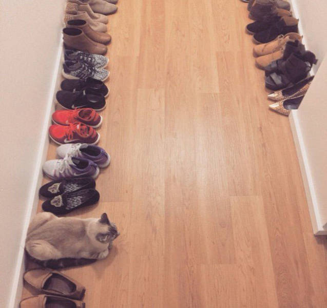 Which One Does Not Belong? (36 pics)
