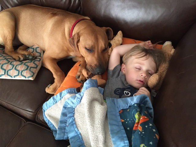 Kids And Pets (22 pics)