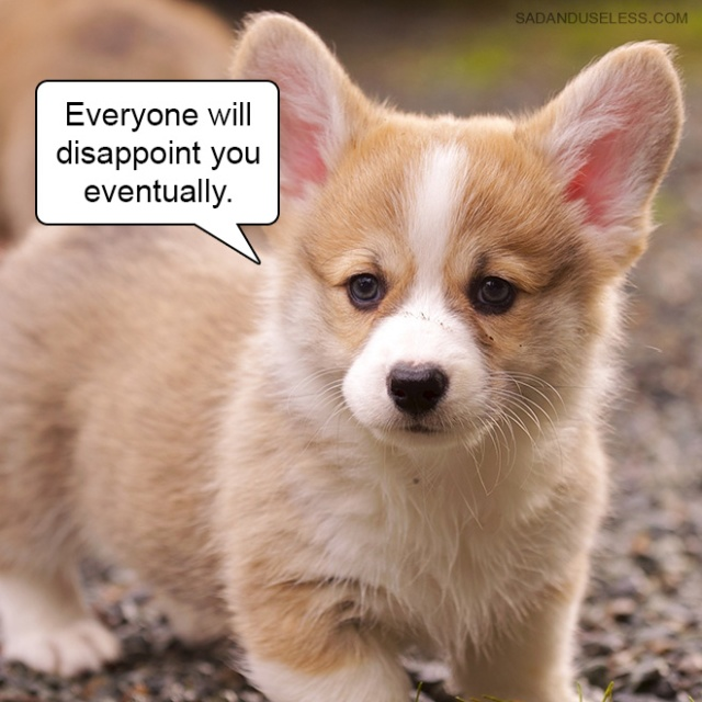 Hard Truths From Cute Puppies (18 pics)