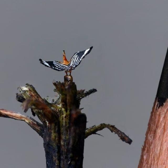 Tiny Birds (18 pics)