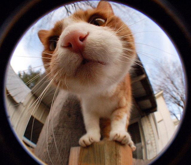Curious Cats Bumping Into Cameras (20 pics)