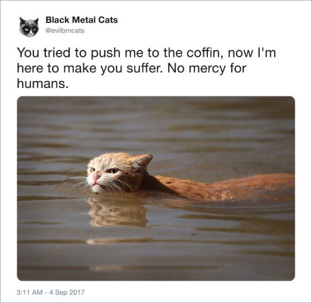 Black Metal Cats (20 pics)