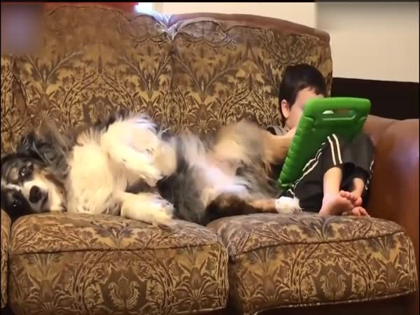 Kid Uses His Dog's Paw To Play A Game On A Tablet