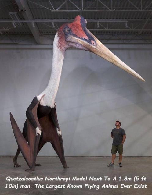 Giant Stuff (40 pics)