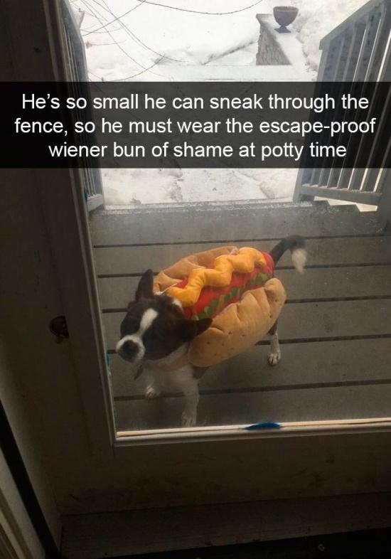Dogs Of Snapchat (14 pics)
