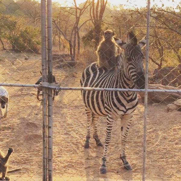 Animal Friendship (30 pics)