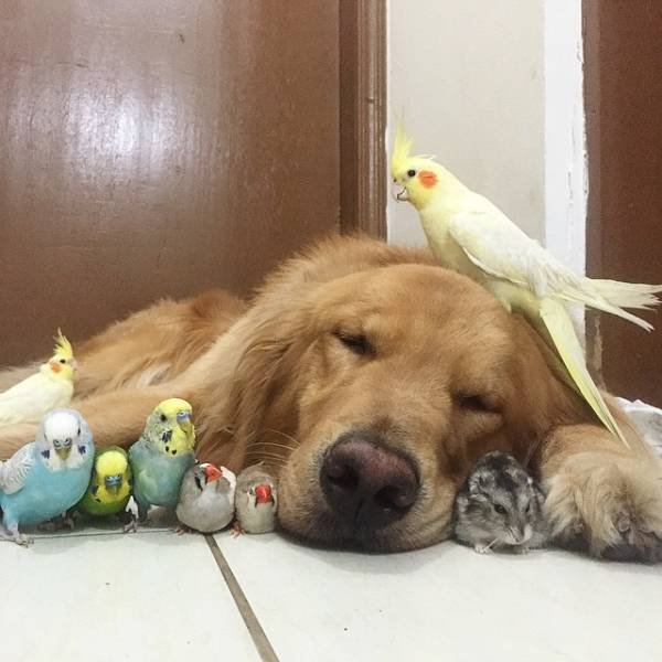 Animal Friendship (30 pics)