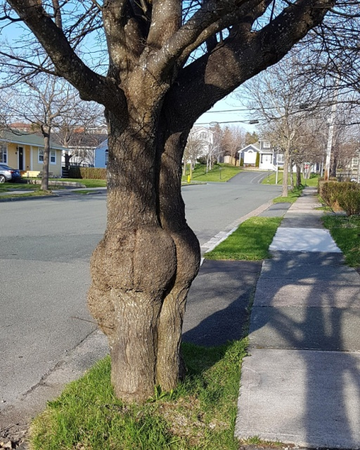 Trees That Look Like Butts (20 pics)