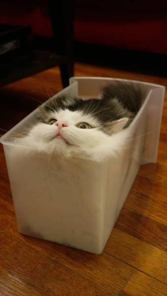 Cats Logic (25 pics)