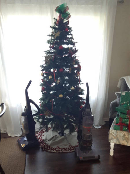 Cat-Proof Christmas Trees (20 pics)
