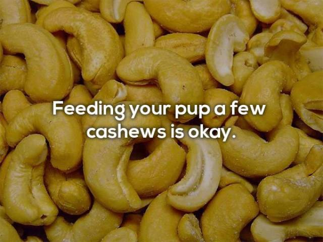 Human Foods That Dogs Can Eat (9 pics)