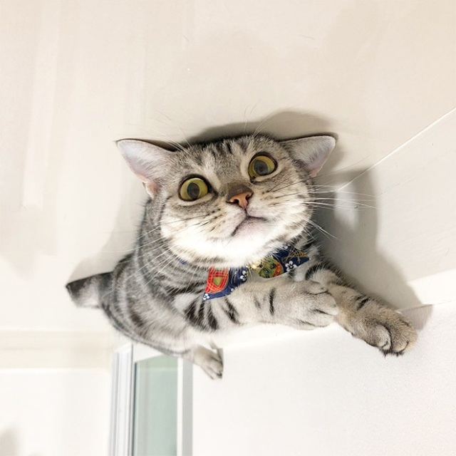 Cat Balloons (20 pics)