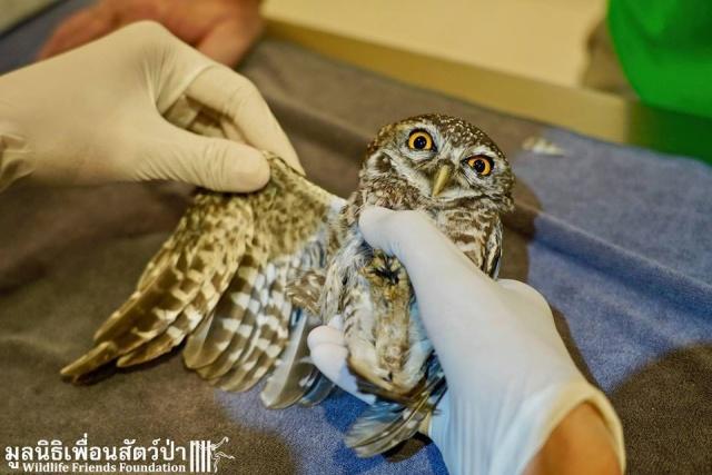 Releasing Owlets (14 pics)
