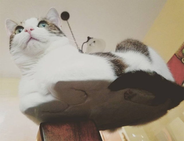 Cats On Glass Tables (20 pics)