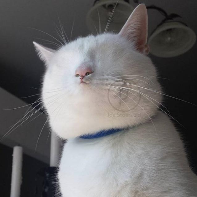 Photoshopped Pets (31 pics)