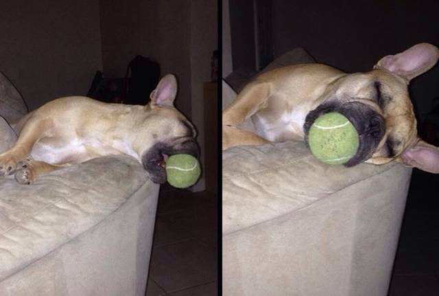 Broken Dogs (23 pics)