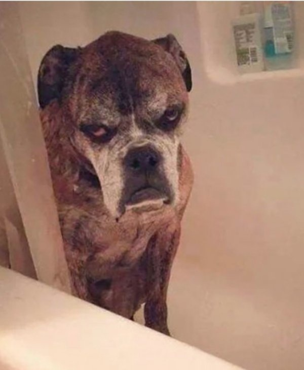 Grumpy Animals (36 pics)
