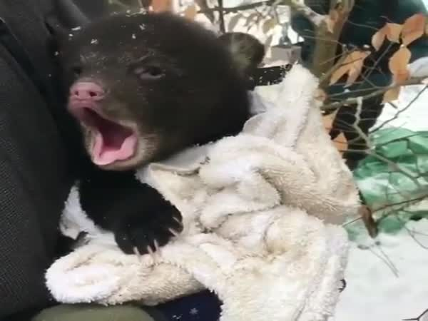 Even The Bear Is Freezing