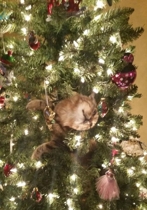 Pets vs. Christmas Trees (21 pics)