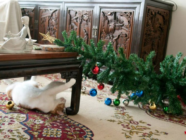 Pets vs. Christmas Trees (21 pics)