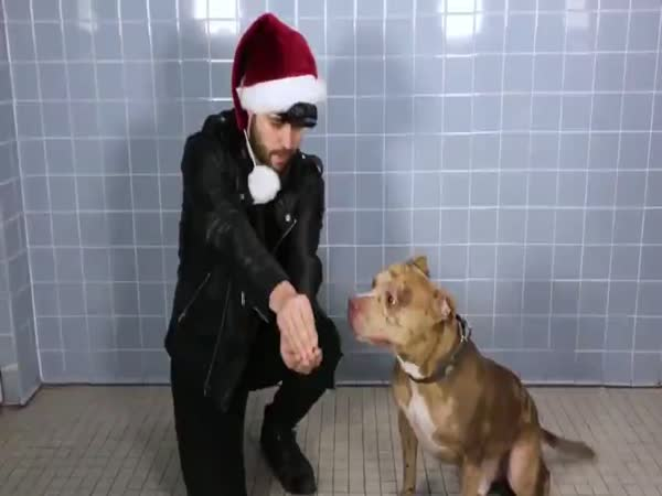 Magician Performs Tricks For Amazed Shelter Dogs