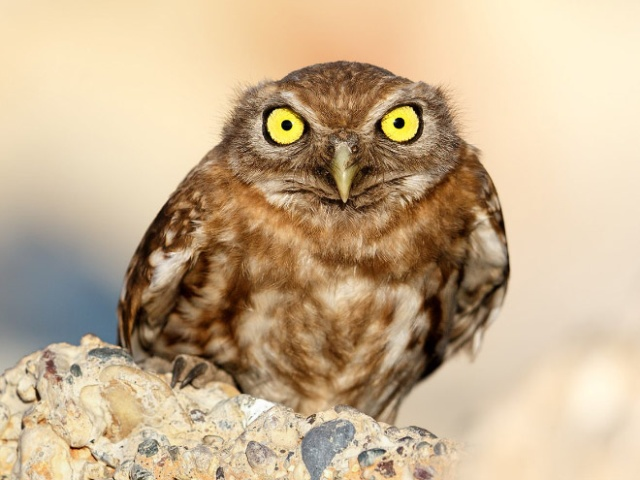 Owls Judge You (20 pics)