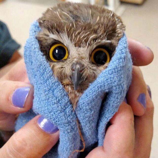 Owls Judge You (20 pics)