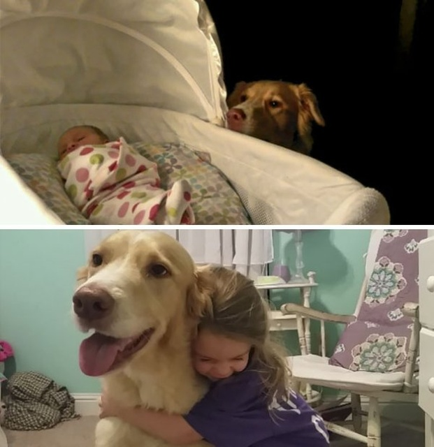 Kids And Dogs (25 pics)