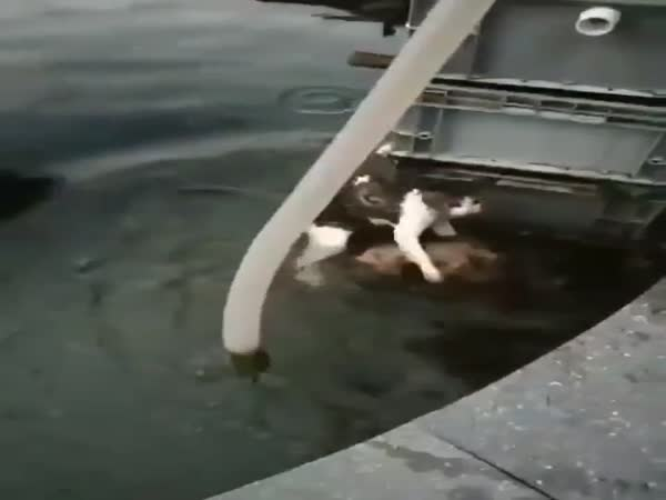 Dog Tries To Save A Cat