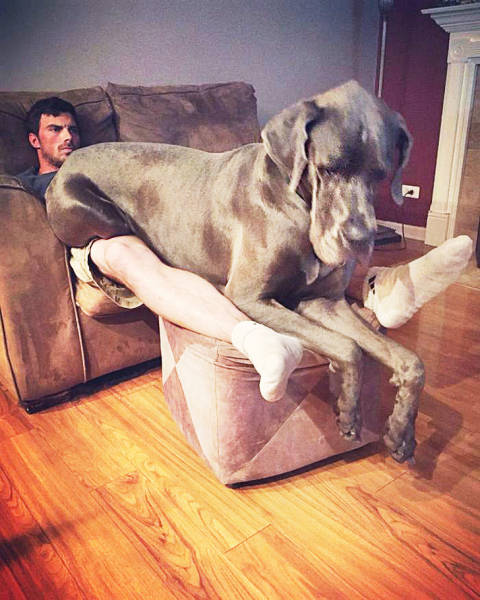 Man's Best Friend (29 pics)
