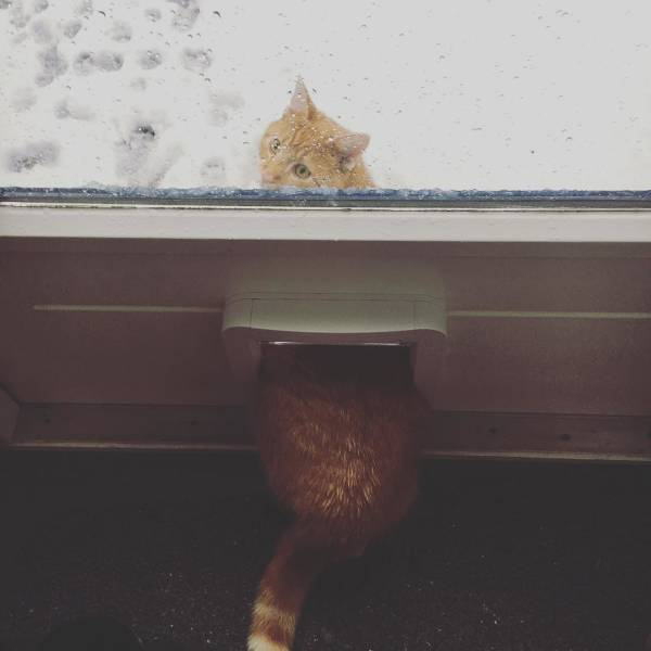 Cats Hate Snow (24 pics)