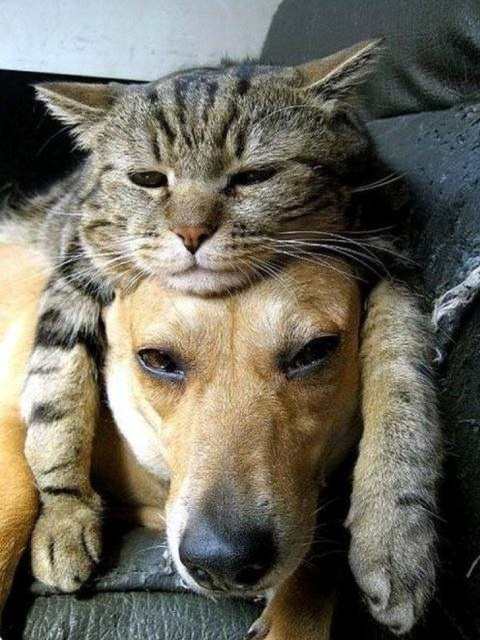 Cats In Love With Dogs (23 pics)