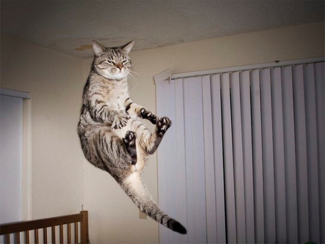 Cats Being Abducted By UFOs (21 pics)