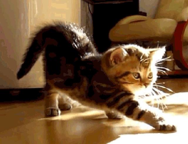 Cat Gifs (17 gifs)