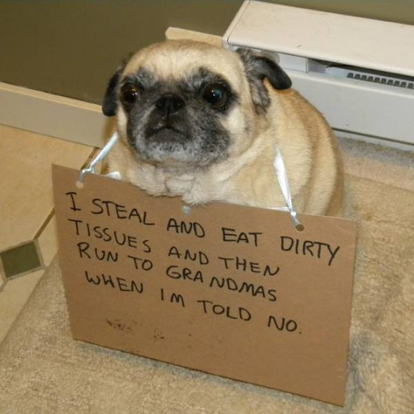 The Best Of Dog Shaming (19 pics)