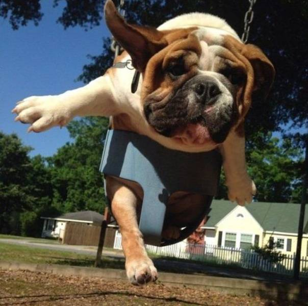 Funny Animals (59 pics)