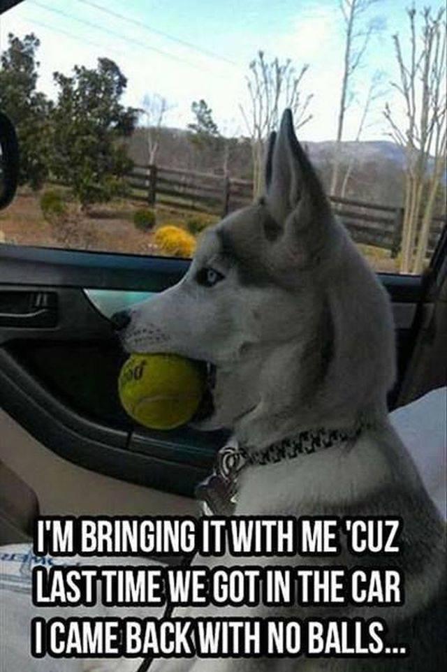 Dog Memes (36 pics)