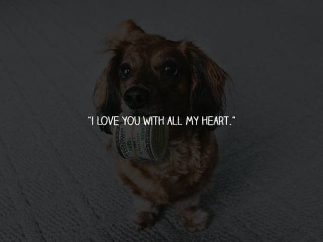 What Your Dogs Wants To Say To You (15 pics)