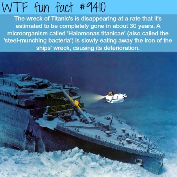 Interesting Facts (29 pics)