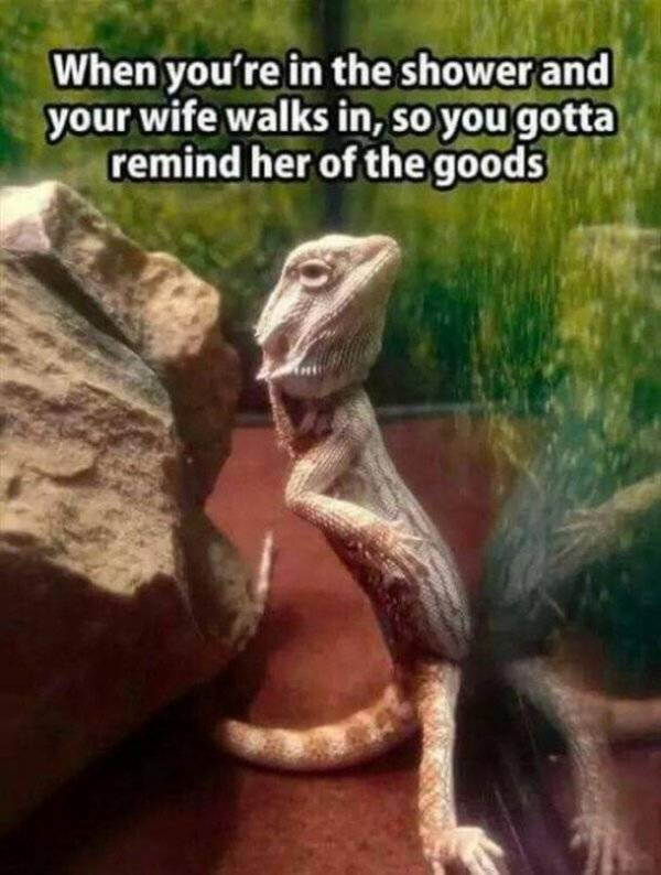 Living With Your Partner Can Be Tough (27 pics)