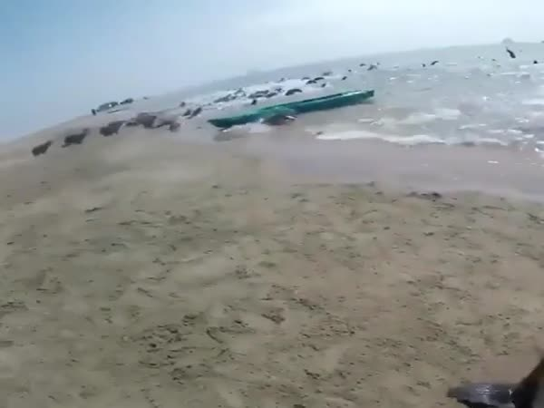 Saving A Sea Doggo