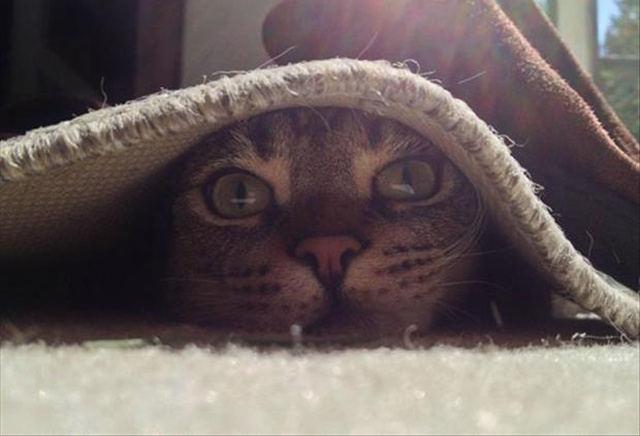 Cat Naps (4 pics)