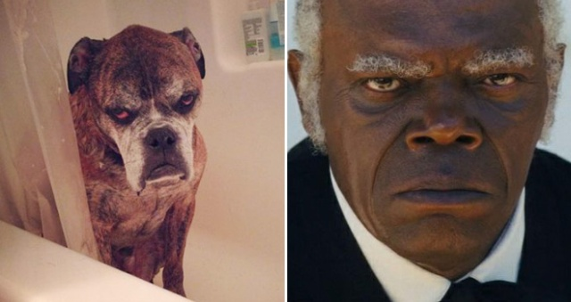 Celebrities And Their Animal Doppelgängers (20 pics)