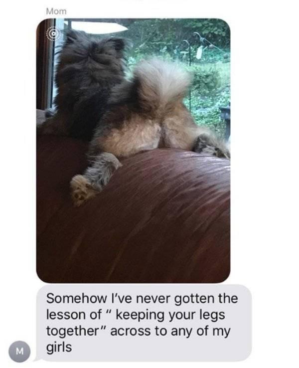 Sex Texts From Parents (19 pics)