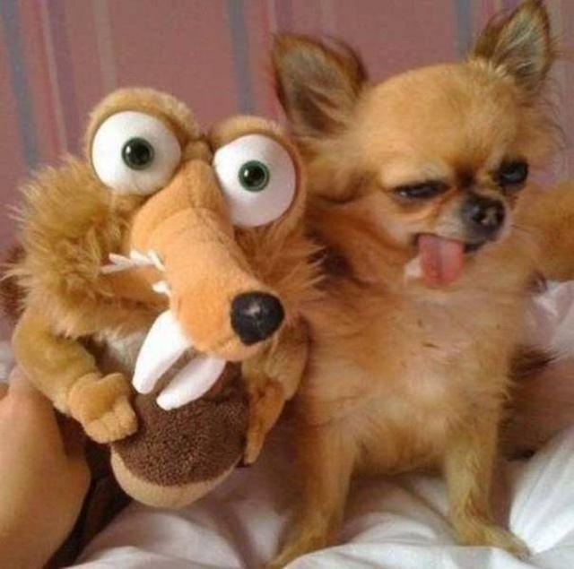 Funny Animals (53 pics)