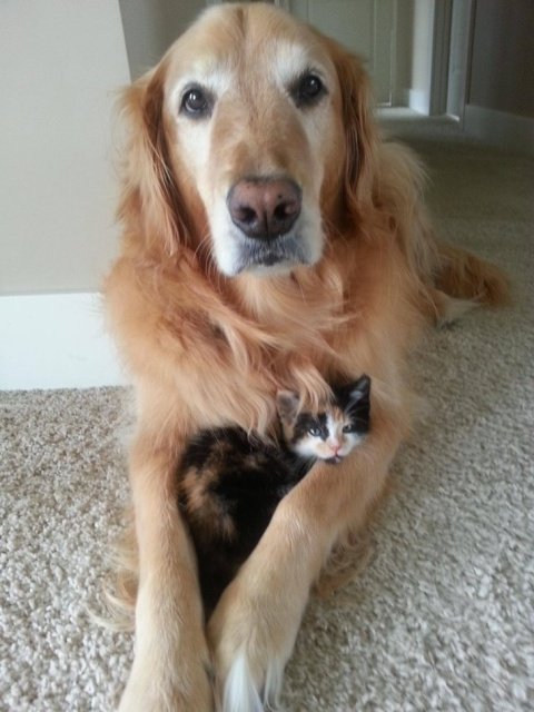Cats And Dogs (20 pics)
