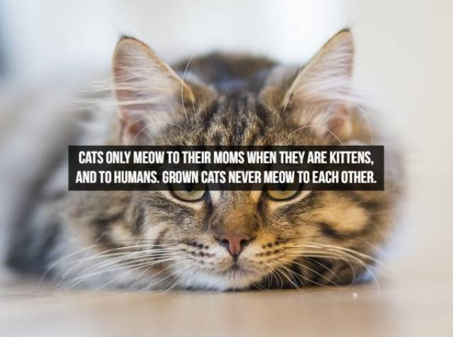 Facts About The Animals (25 pics)