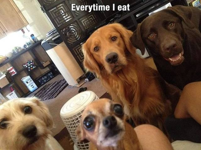 Dogs Are Awesome (21 pics)