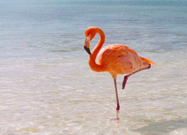 Have You Ever Seen A Little Flamingo? (4 pics)
