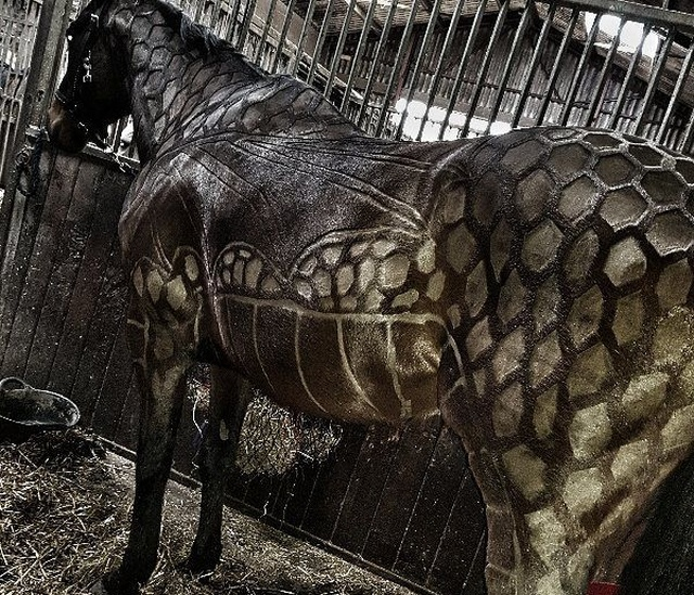 Hairdresser Turns Horses Into Living Works Of Art (7 pics)